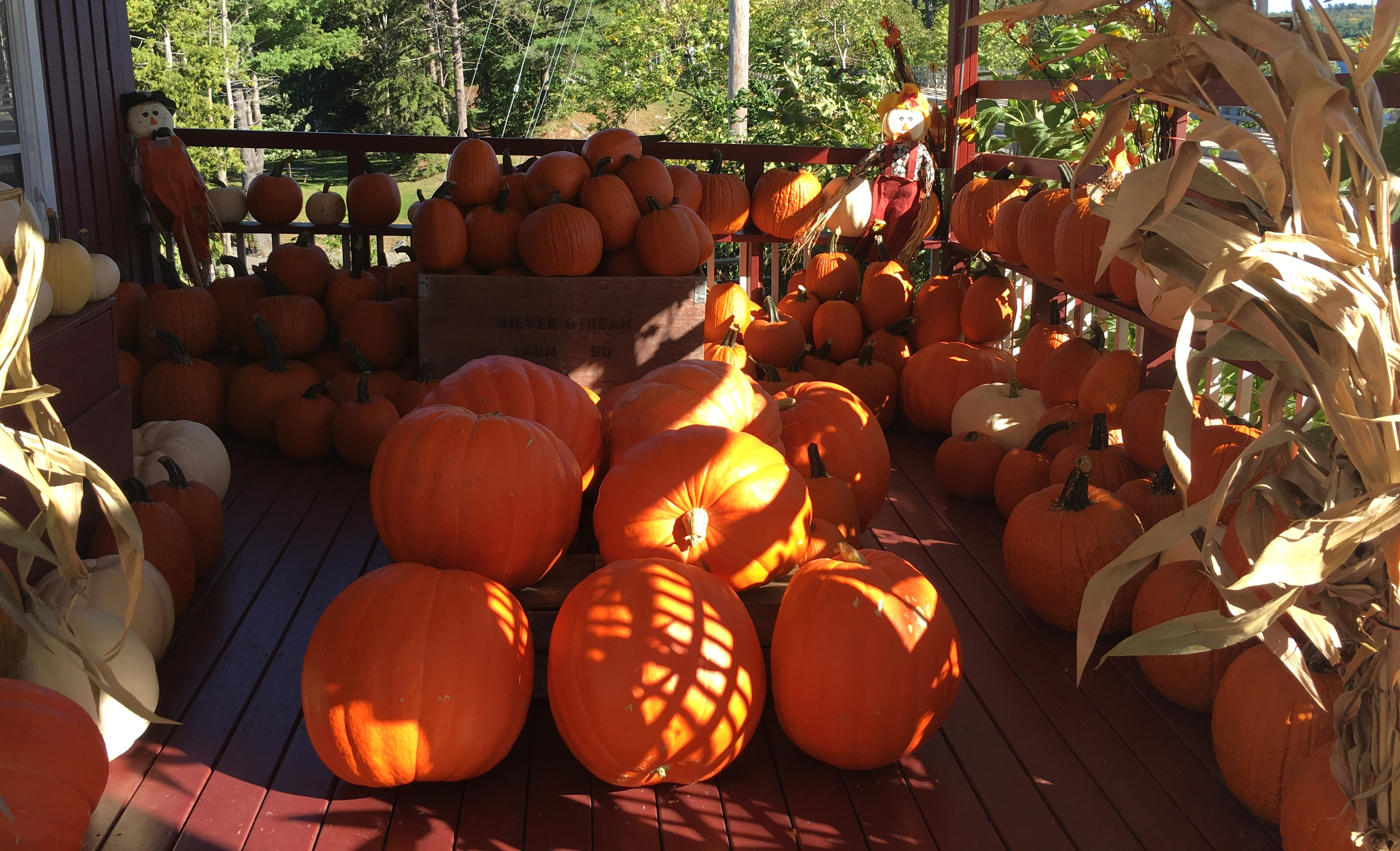 Fall has arrived in Port Sandfield